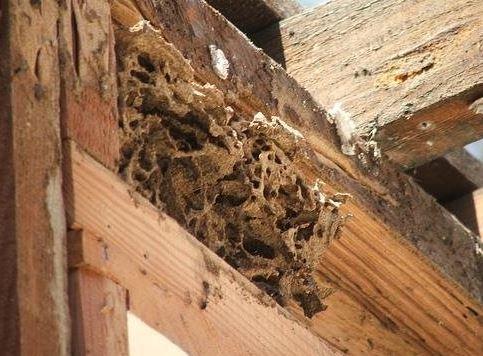 termite flooring problem