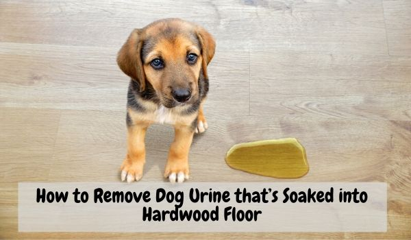 How-to-Remove-Dog & Cat-Pets-Urine-that's-Soaked-into-Hardwood-Floor
