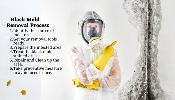 black mold removal process, steps to effectively remove black mold