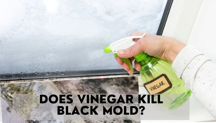 Does Vinegar Kill Black Mold?