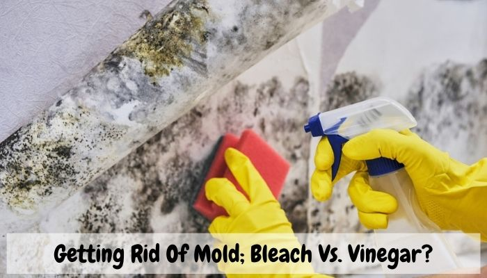 What Gets Rid Of Mold; Bleach Vs. Vinegar?