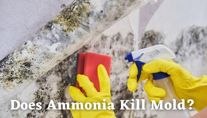 Does Ammonia Kill Mold