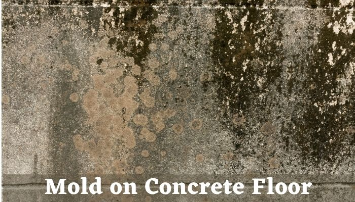 Picture of mold on concrete floor, white mold on concrete floor